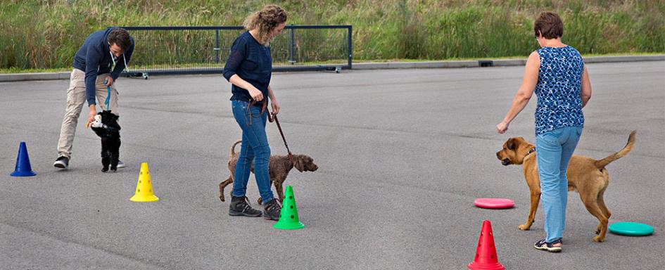 Pets Academy hondenschool