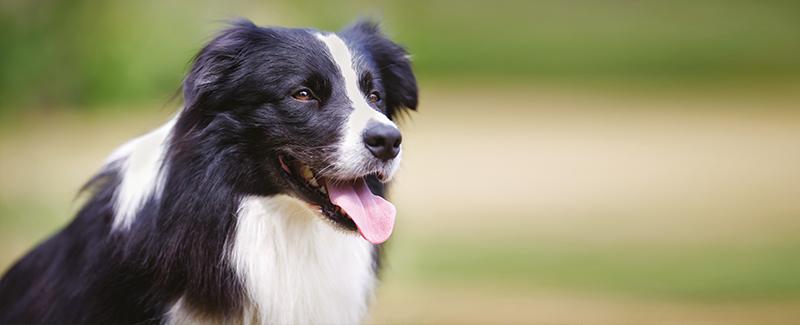 Cursus gehoorzame hond