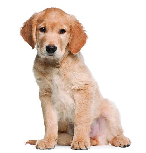 Leermethode Pets Academy hondenschool